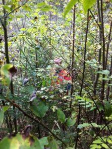 terrain measuring in dense vegetation and wormwood